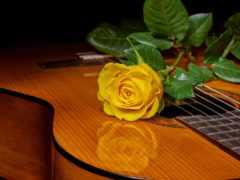музыка, Сакура, роза