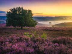 albert, dros, пейзажи -