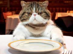 кот, есть, хочет