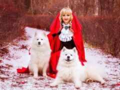 собака, winter, шпиц