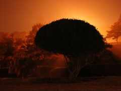 закат, дерево, природа
