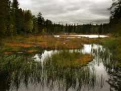 swamp, широкоформатные, трава