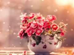 цветы, объект, фото