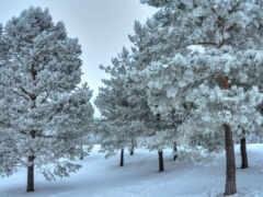 дерево, снег, landscape