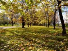 осень, природа, листва