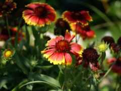 цветы, beirut, fractal