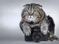 кот, фотоаппарат, залез
