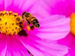 пчелка, photography, цветы