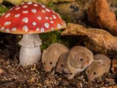 flickr, mushroom, images