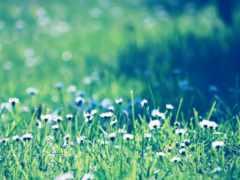 hijau, rumput, iphone