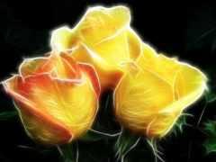 rosas, con, fotos