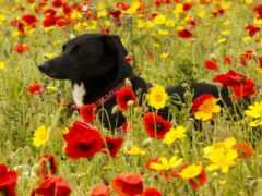 собака, cvety, yellow