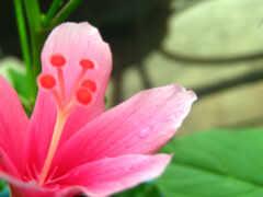 lily, gentle, размытость