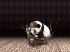 панда, медведь
