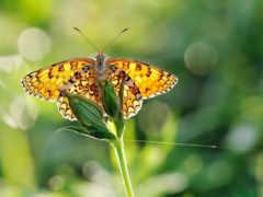 бабочка, дружит, бабочки