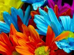 яркий, flowers, colorful