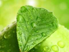apple, wallbox, зелёный