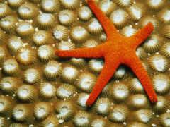 star, морские, звезды