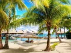пальмы, пляжи, отдых