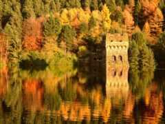 sunny, день, осень