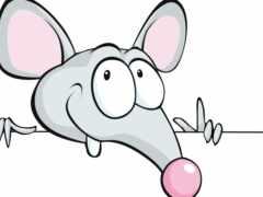 mouse, white, крыса