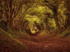 fore, лес, дерево