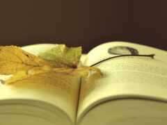 книга, master, красивый