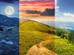 природа, луна, дерево