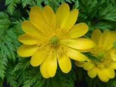 цветы, выращивание, посадка