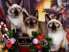 cat, christmas