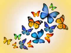 бабочки, чёрно, бабочка