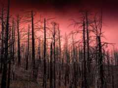 дерево, природа, закат