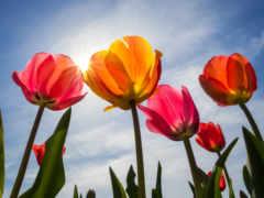 cvety, zonnige, dag