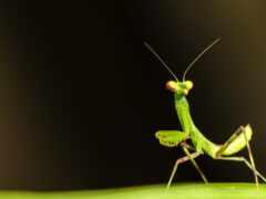 mantis, грут, малыш