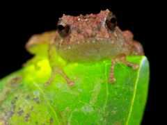 toad, лягушка, lyaguh