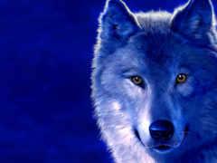 волк, рисунок