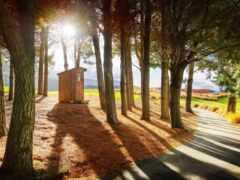 природа, дерево, лес