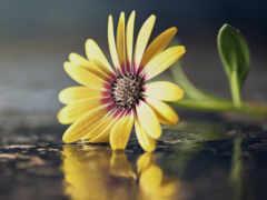 makryi, цветы, бутон