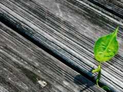 текстура, wallpapersafari, wood
