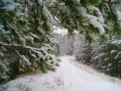 winter, зимушка, природа