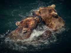 zhivotnye, медведь, море