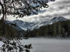 горы, лес, снег