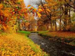 река, wood, осень