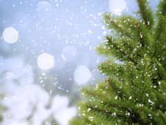 winter, снег, разделе Фон № 160743 разрешение 2560x1600