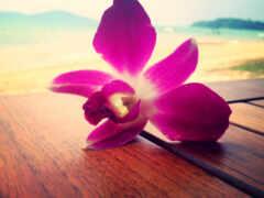 море, цветы, орхидея