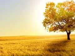 поле, сено, wetland