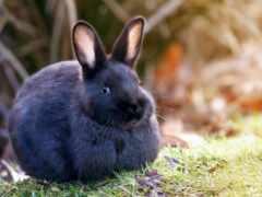 заяц, серый, кролик