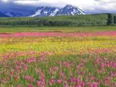 cvety, поле, салатовый