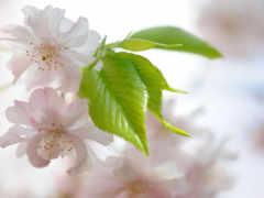 нежное, природы, цветение