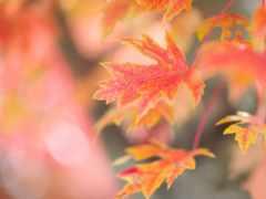 листва, осенние, branch